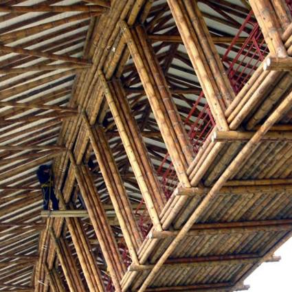 Bamb e architettura sostenibile i vantaggi della pianta for Bamboo coltivazione