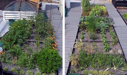 Come realizzare un giardino pensile o un tetto verde in 5 for Creare piccolo giardino