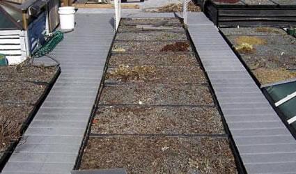 Come realizzare un giardino pensile o un tetto verde in 5 for Costruire giardini