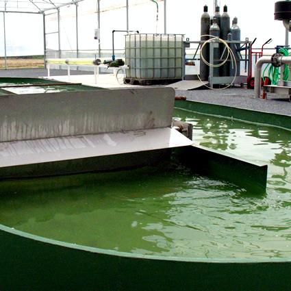Risultato immagine per depurazione acqua microalghe