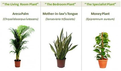 Aria pulita in casa o in ufficio 3 specie di piante - Piante per ufficio ...