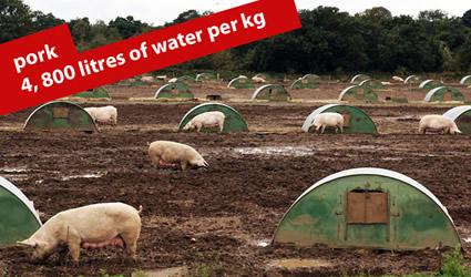 http://www.genitronsviluppo.com/ecologia/consumo_acqua_consumo_risorse_idriche_consumo_acqua_dolce_consumare_acqua_risparmiare_acqua_risparmio_idrico_risparmiare_risorse_idriche_5.jpg