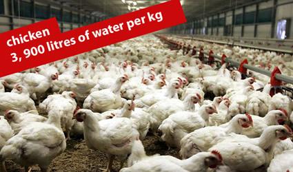 http://www.genitronsviluppo.com/ecologia/consumo_acqua_consumo_risorse_idriche_consumo_acqua_dolce_consumare_acqua_risparmiare_acqua_risparmio_idrico_risparmiare_risorse_idriche_6.jpg