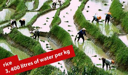 http://www.genitronsviluppo.com/ecologia/consumo_acqua_consumo_risorse_idriche_consumo_acqua_dolce_consumare_acqua_risparmiare_acqua_risparmio_idrico_risparmiare_risorse_idriche_8.jpg