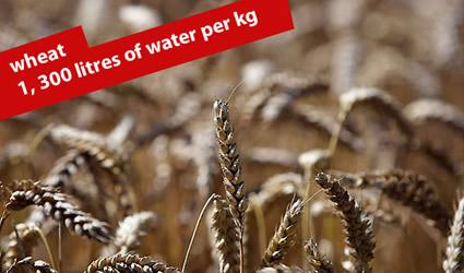 http://www.genitronsviluppo.com/ecologia/consumo_acqua_consumo_risorse_idriche_consumo_acqua_dolce_consumare_acqua_risparmiare_acqua_risparmio_idrico_risparmiare_risorse_idriche_9.jpg