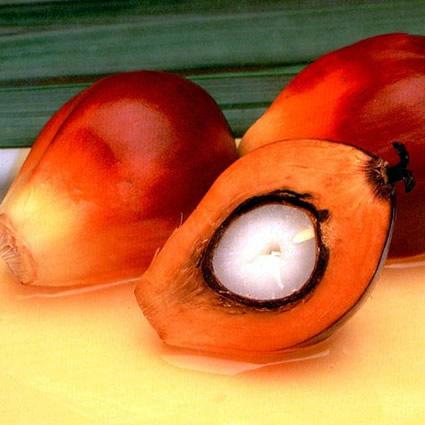 olio_di_palma_biocarburante_olio_di_palma_olio_friggere_olio_di_palma_indonesia_olio_di_palma