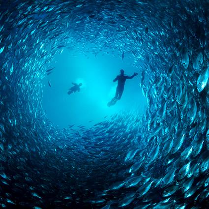 vivace, vivace energia dal mare, vivace energia dalle correnti,  energia mare, energia oceano