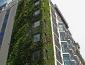 giardini_verticali_patrick_blanc_giardino_verticale_giardiniere_verticale_giardino_verticale_4