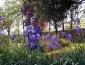 bioenergetic_landscapes_marco_nieri_ecodesigner_bioenergetic_landscapes_giardino_terapeutico_8