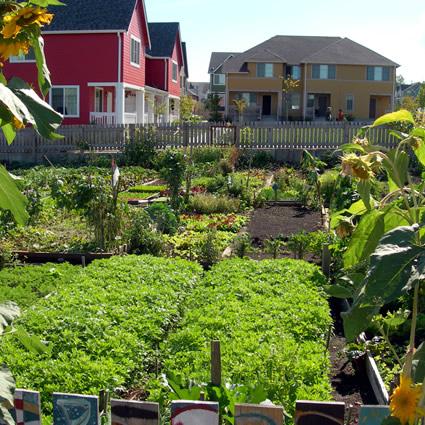 Guida ad un giardinaggio sostenibile 10 modi e per - Guida giardinaggio ...