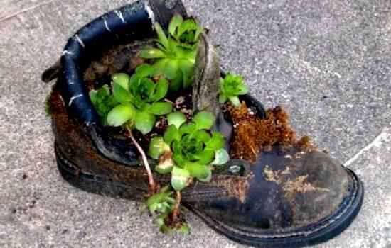 Guida ad un giardinaggio sostenibile 10 modi e per for Linee d acqua in plastica vs rame