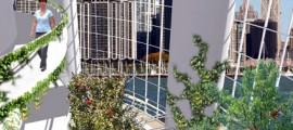 agricoltura_verticale_aziende_agricole_verticali_giardini_verticali_fattorie_verticali_coltivazioni_6