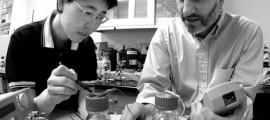 celle_combustibile_microbiche_mfc_energia_piante_riso_vegetazione_elettrica_microbial_fuel_cells_4