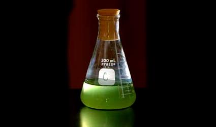 alghe_biodiesel_alghe_biocarburante_biocarburanti_alghe_algaelink_biodiesel_alghe_2