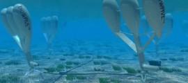 biowave_biopower_systems_bio_wave_biostream_energia_dal_mare_energia_dalle_maree_correnti_sottomarine_mare_correnti_energia_produrre_biowave_biostream_1