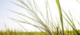 butanolo_etanolo_biocarburante_biocarburanti_combustibile_carburante_biodiesel_butanolo_4
