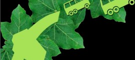 jatropha_curcas_biodiesel_jatropha_biocarburante_jatropha_curcas_combustibile_jatropha_curcas_pianta_jatropha_10