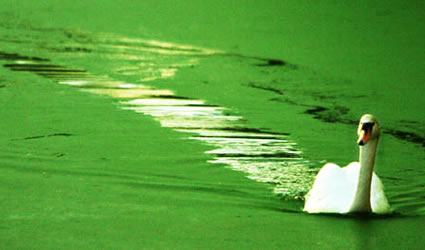 algenol_etanolo_alghe_biocarburante_etanolo_dalle_alghe_algenol_co2_combustibili_alghe_2