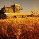 agricoltura_biodinamica_metodo_biodinamico_agricoltura_biodinamica_approccio_biodinamico_agricoltura_biologica_biodinamica_steiner_biodinamico_rudolf_steiner_4