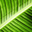fotosintesi_artificiale_nanotubi_fotosintesi_artificiale_nanotubi_carbonio_fotosintesi_co2_nanotecnologia_nanotecnologie_fotosintesi_artificiale_5