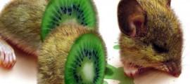 ogm_africa_usa_colture_geneticamente_modificate_ogm_africa_usa_pacchetto_aiuti_carenza_alimenatare_3