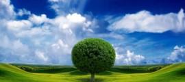 alghe_biocarburante_alghe_mais_etanolo_mais_bioplastica_mais_plastica_biodegradabile_guayule_gomma_guayule_velcro_loto_nanotecnologia_loto_1