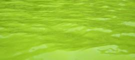 alghe_biodiesel_ararat_australia_biocarburante_alghe_biodiesel_alga_produzione_alghe_produrre_biodiesel_stagn_alghe_biodiesel_dalle_alghe_1