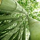 bambu_sostenibile_bamboo_tessuti_bambu_fibra_in_bamboo_fibra_in_bambu_sostenibile_bambu_insostenibile_bamboo_uso_abbigliamento_bambu_26