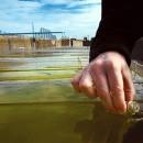 benzina_sintetica_alghe_green_crude_benzina_biocarburante_alghe_aquaflow_bionomic_corporation_benzina_alghe_4