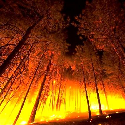 energia_elettrica_alberi_energia_elettrica_albero_prevenire_incendi_prevenire_incendio_energia_alberi_3