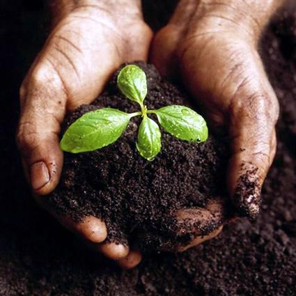 giardinaggio_sostenibile_compost_giardino_sostenibile_raccolta_acque_grigie_pacciame_compost_giardinagio_sostenibile_4