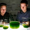 solazyme_biodiesel_soladiesel_biodiesel_alghe_soladiesel_solazyme_biocarbuante_dalle_alghe_solazyme_soladiesel_coltivazione_alghe_solazyme_1