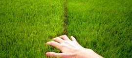 verde_verticale_ustatic_erba_muro_verde_ustatic_giardino_verticale_erba_verticale_ustatic_depurazione_aria_innovazione_tencologia_sostenibile_4