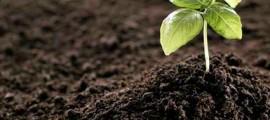 agricoltura_biodinamica_preparati_vegetali_biodinamica_agricoltori_biodinamici_maria_thun_7