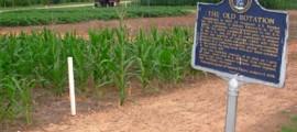 agricoltura_sostenibile_produzione_agricola_sostenibile_colture_agricole_sostenibili_coltura_agricola_sostenibile_1