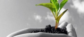 associazione_agricoltura_biodinamica_agricoltori_biodinamici_agricoltura_biodinamica_corsi_1