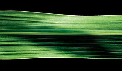etanolo_cellulosa_legno_biocarburanti_da_legname_cellulosa_etanolo_biocarburante_zuccheri_etanolo_produrre_biocarburanti_3