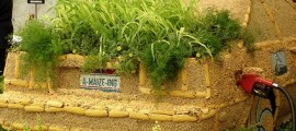etanolo_mais_biocarburante_efficienza_energetica_etanolo_biodiesel_coltura_bioenergetica_etanolo_mais_colture_bioenergetiche_4