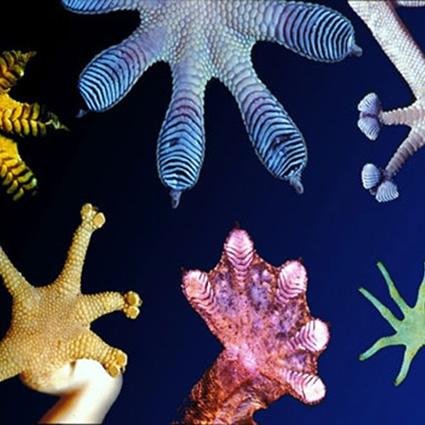 biomimesi_ecodesign_biomimesi_progettazione_sistemica_design_sostenibile_design_sistemico_eco_design_biomimesi_biomimicry_guild_2