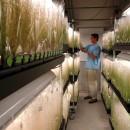 ogm_colture_genet_ogm_agricoltura_ogm_organismi_geneticamente_modificati_grano_mais_soia_biocarburanti_ogm_coltivazioni_ogm_6 (1)