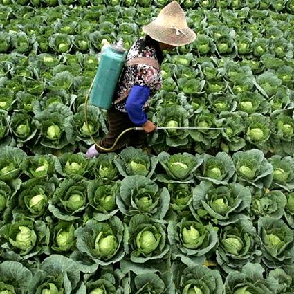 agricoltura_co2_agricoltura_sostenibile_biocarburanti_3