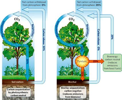 biochar_carbone_agricolo_foreste_tropicali_sviluppo_locale_3