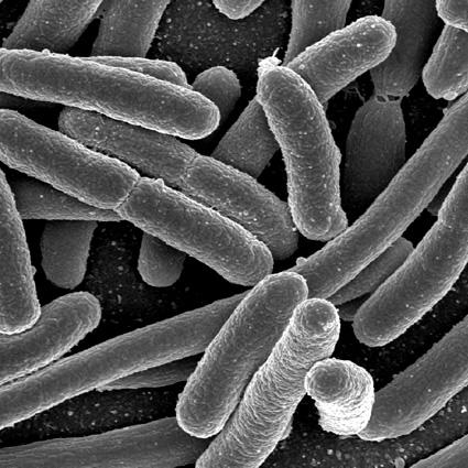 e_coli_ecoli_biocarburante_ingegneria_genetica_ecoli_biocarburanti_quarta_generazione_batteri_biocarburanti_1