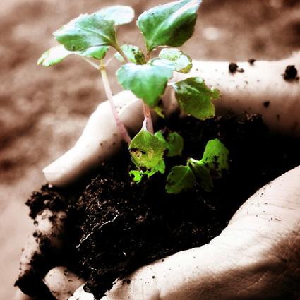agricoltura_sostenibile_metriche_agricoltura_sostenibile_3