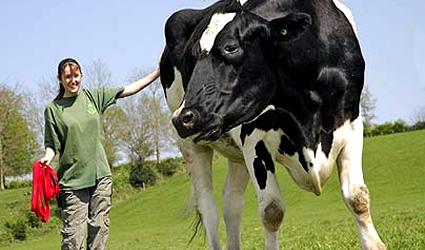 antibiotici_allevamento_farmaci_animali_dopati_industria_allevamento_antibiotici_verdura_2