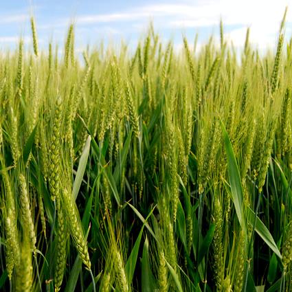associazione_agricoltura_biodinamica_agricoltori_biodinamici_agricoltura_biodinamica_corsi_12