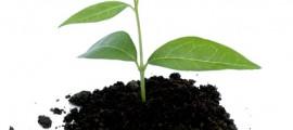 biochar_carbone_agricolo_unccd_biochar_carbone_agricolo_agricoltura_1