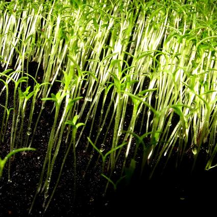 capelli_fertilizzante_agricoltura_biologica_capelli_concime_biologico_capelli_fertilizzante_biologico_4