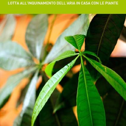 cov_piante_pulizia_aria_sostanze_tossiche_aria_appartamento_cov_1