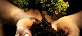 riscaldamento_clima_geoingegneria_agricoltura_raffreddare_clima_riscaldamento_terrestre_biogeoingegneria_agricoltura_luce_sole_5